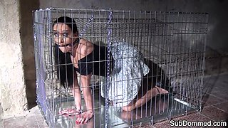 Restrained beauty caged and toyed